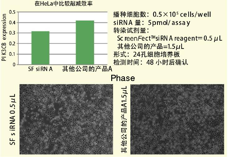 ScreenFect™ 通信 向HeLa细胞导入siRNA数据