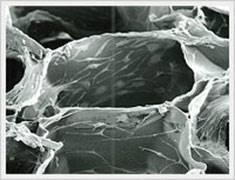 去端肽胶原,蜂窝海绵