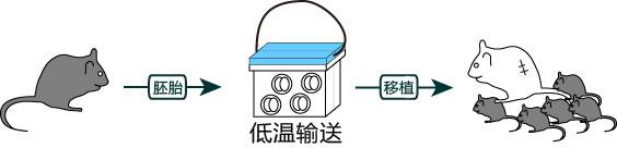 冷藏运输试剂盒
