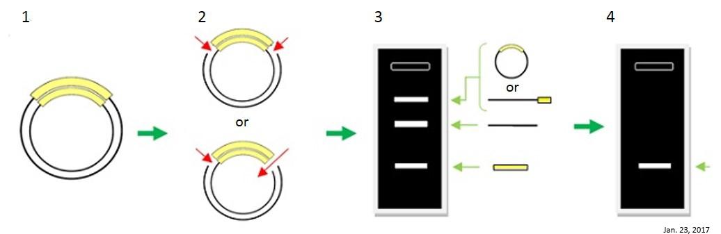 长单链DNA(ssDNA)制备试剂盒