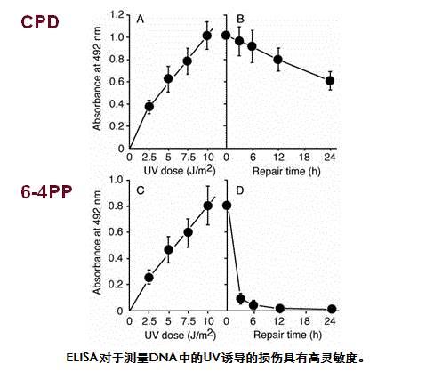 抗(6-4)光产物(6-4 PPs)单克隆抗体(克隆:64M-2)