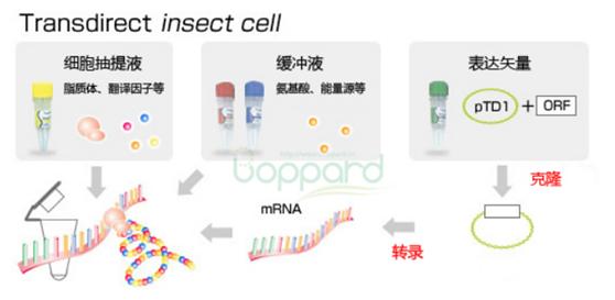 无细胞蛋白质合成试剂盒