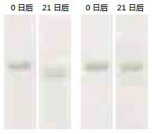 即用型彩色蛋白预染Marker,稳定型