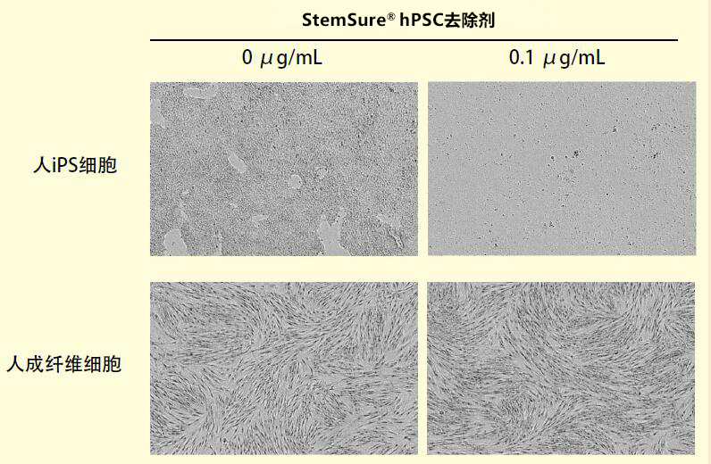 StemSure® hPSC去除剂【rBC2LCN-PE38】