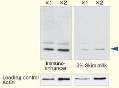 Immuno-enhancer