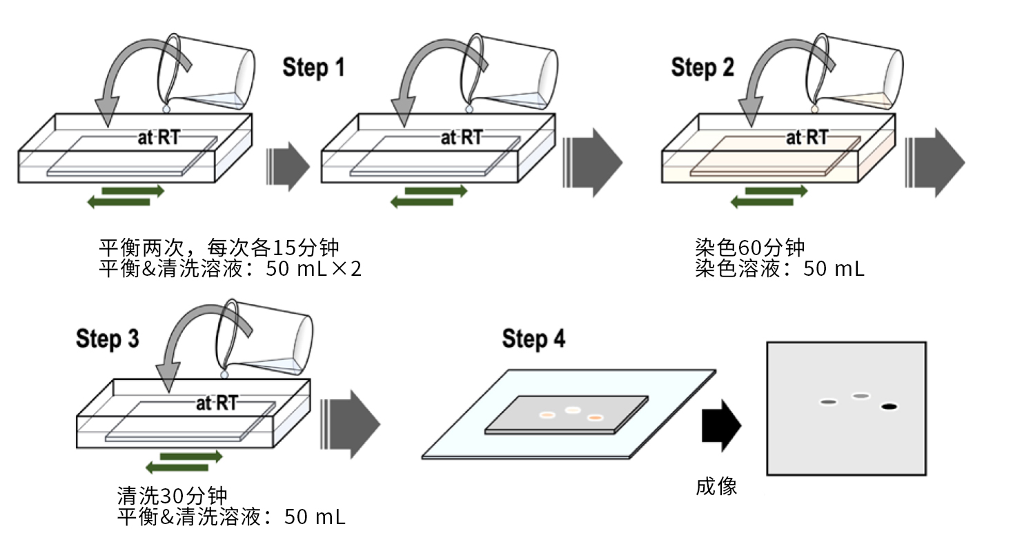 Phos-tag™ 凝胶荧光染料