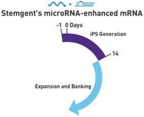 microRNA增强试剂盒