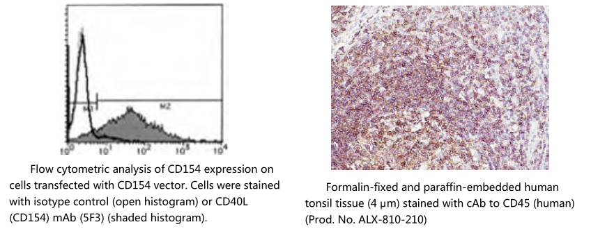 胚胎干细胞标记物