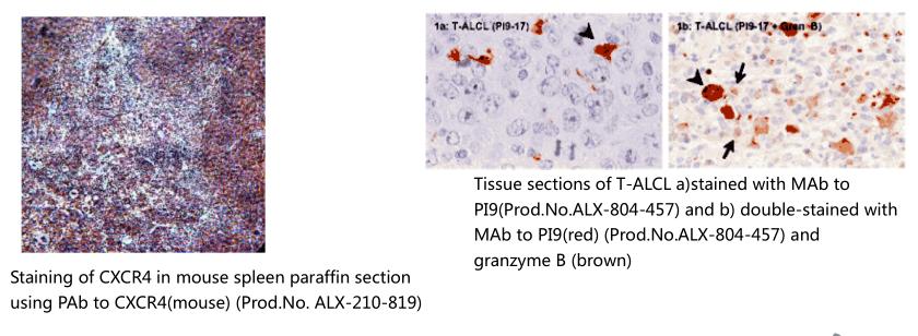 间充质干细胞标记物