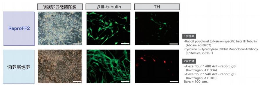 灵长类胚胎干细胞/诱导多能干细胞培养基
