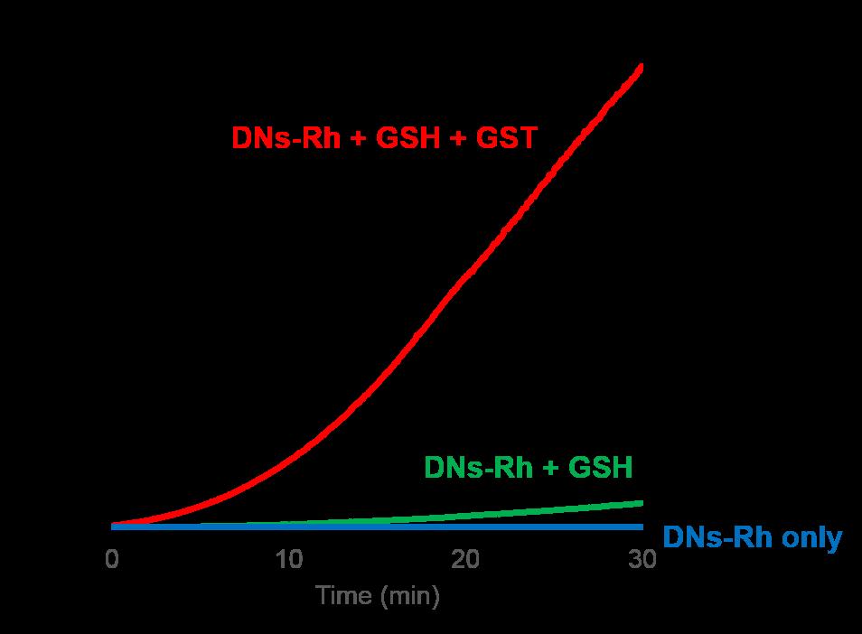 DNs-Rh <Cell-based GST Activity Assay Reagent>