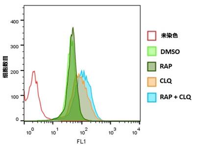 CYTO-ID® 自噬检测试剂盒 2.0
