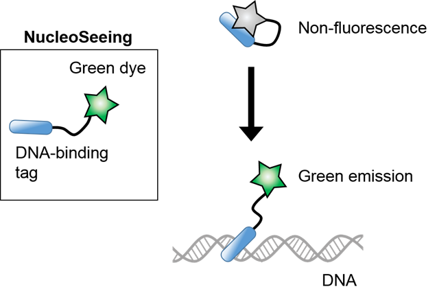NucleoSeeing <Live Nucleus Green>