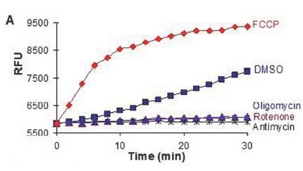 氧化应激检测试剂盒