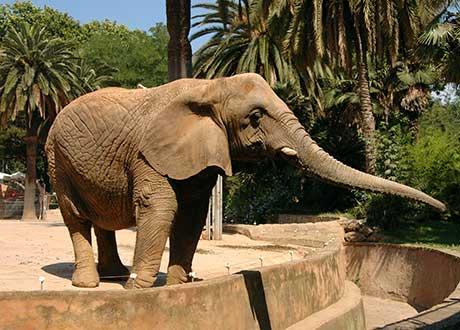 动物保育相关激素分析ELISA试剂盒