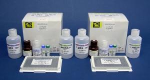 血蓝蛋白(KLH)(T细胞依赖性抗原)大鼠免疫球蛋白G(IgG)ELISA试剂盒