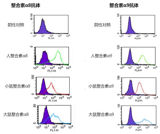 抗整合素α8、α9,单克隆抗体
